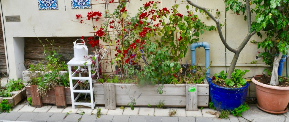 Wandering Tel Aviv's Neve Tzedek Neighborhood thumbnail