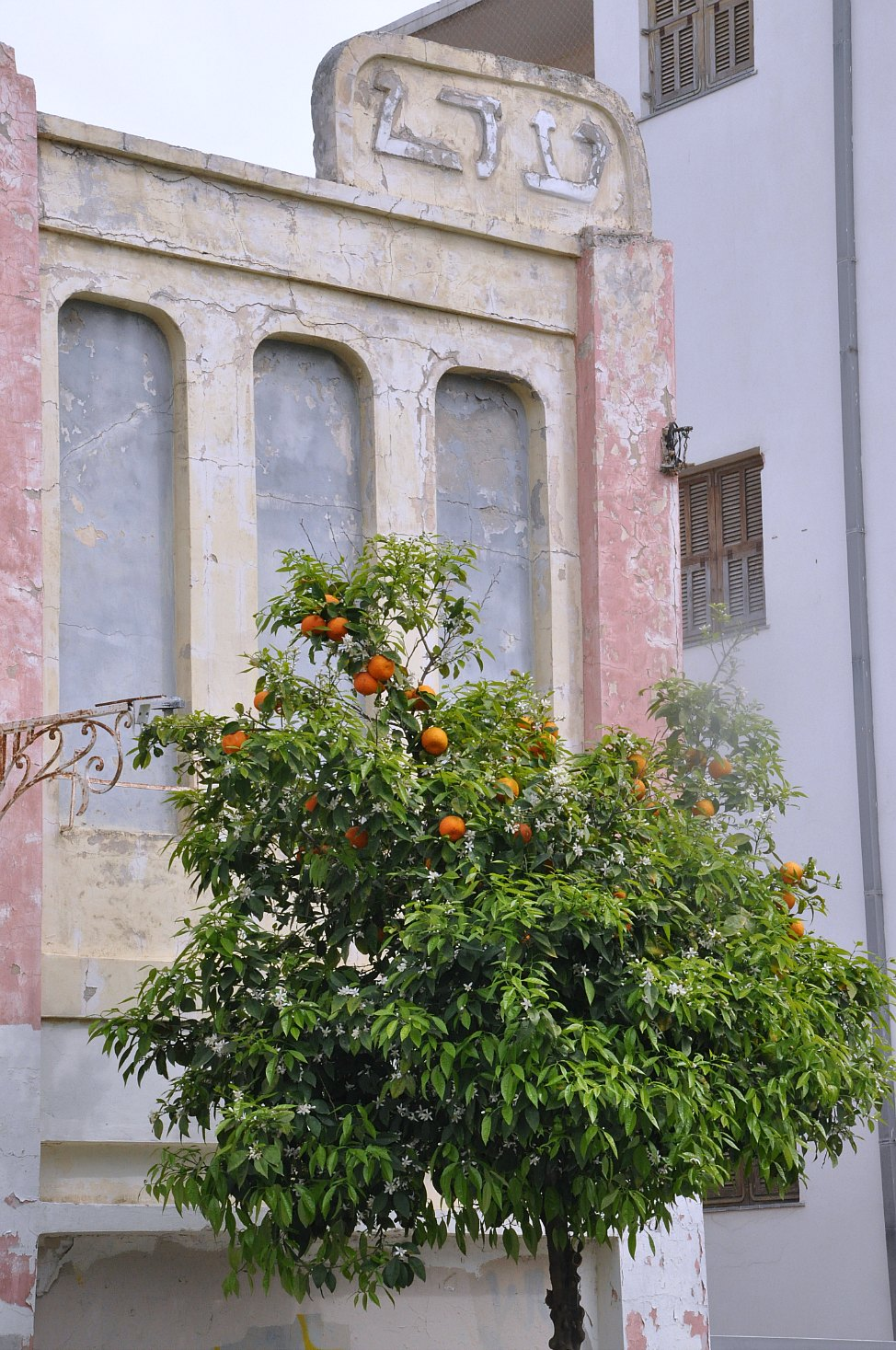 Neve_Tzedek_Orange_Tree