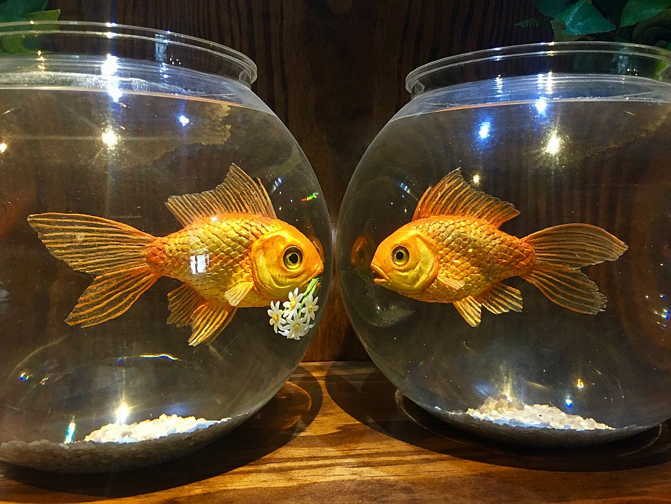 Post_Walled_Off_Hotel_Fish_Bowls